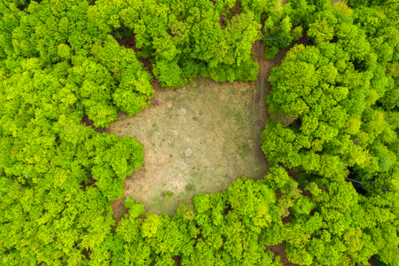 Prairie de clairière dans une forêt verte, tir de drone aérien