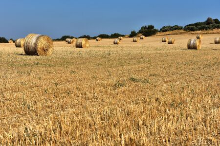 Straw bales, haystack in a meadow after summer harvest Imagens