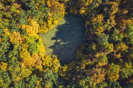 Top view of a forest clearing from a drone. Aerial shot, autumn wood, heart shaped meadow