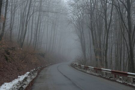 Misty spooky dark forest. The creepy Hoia Baciu wood, Romania is considered the world's most haunted woodlands