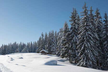 Alpine landscape with snow covered mountains, fir trees and pine forest at winter
