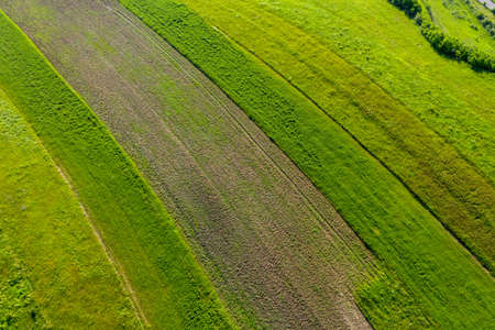 Aerial view of green plantation, agricultural field by drone