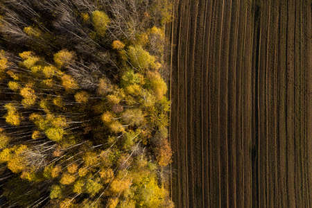 Aerial view of deforestation area for agricultural land by drone. Contact zone between forest and plantation Stock Photo