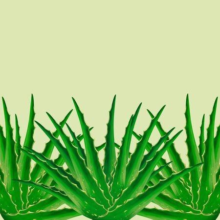 aloe vera plant: Aloe Vera plant background