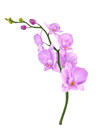 Pink Orchid Flower - illustration painting