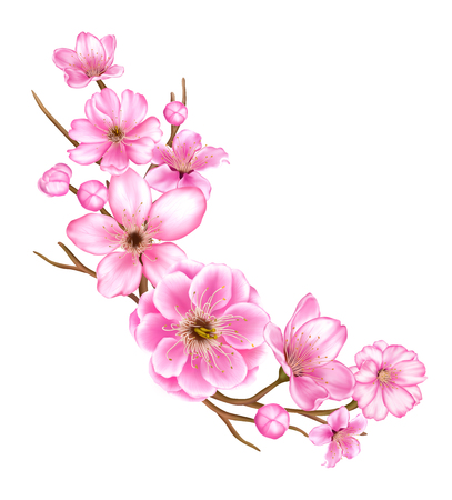 cherry blossom branch illustration