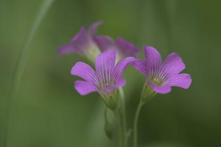 3 flowers 版權商用圖片