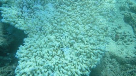 Underwater corals bali indonesia Stock Photo - 27741510