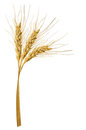 three spikelets of wheat isolated on white background
