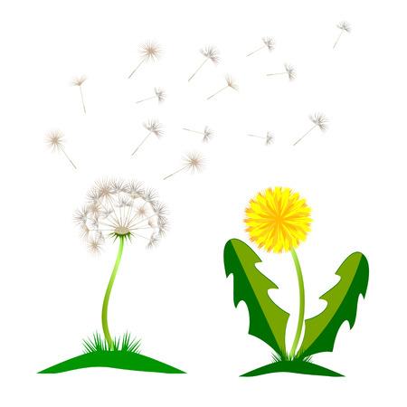 Hermoso diente de León amarillo con hojas Prado de flores. Icono de vector de diente de León que sopla botánica jardín logo floral.