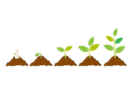 종자 심기는 땅에 새싹. 인포 그래픽 시퀀스는 묘목을 키운다. 모 종 뜰을 만드는 나무입니다. 아이콘, 평면 흰색 배경에 고립입니다. 벡터 일러스트 레