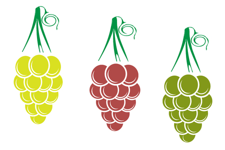 Different variety of grape on white background. 向量圖像