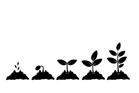 Planting seed sprout in ground. Infographic sequence grow sapling. Seedling gardening tree. Icon, flat isolated on white background. Vector
