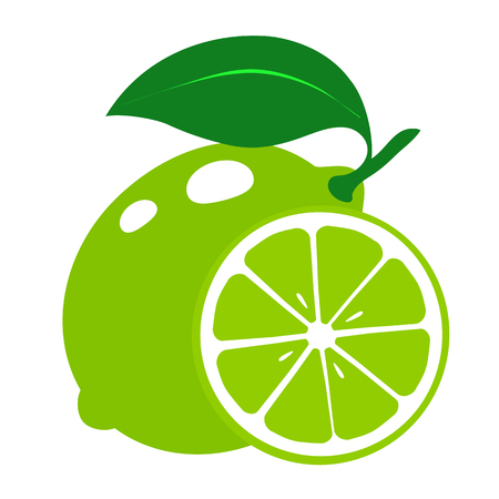 Fresh slices of lime isolated on white background. Vector illustration.