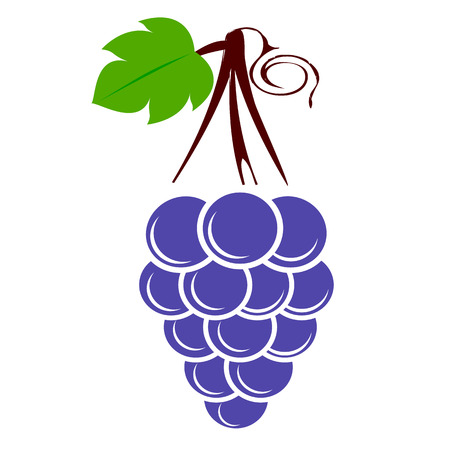 Variety of grape on white background. Vector illustration