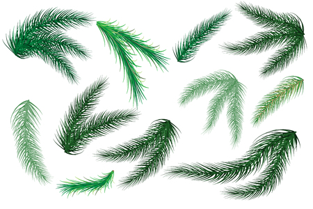 Christmas tree branches. Set of tree, fir, pine. Isolated on a white background. Vector illustration