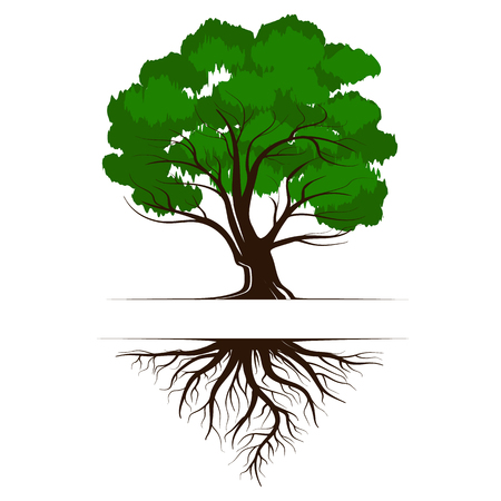 Oak a green life tree with roots and leaves. Vector illustration icon isolated on white background.
