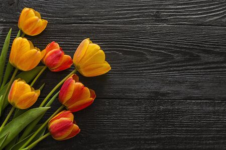Beautiful Tulip flowers on a dark, black wooden background. Spring bouquet. Flat lay, top view, copy space. Фото со стока