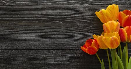 Beautiful Tulip flowers on a dark, black wooden textured background. Spring bouquet. Flat lay, top view, copy space.