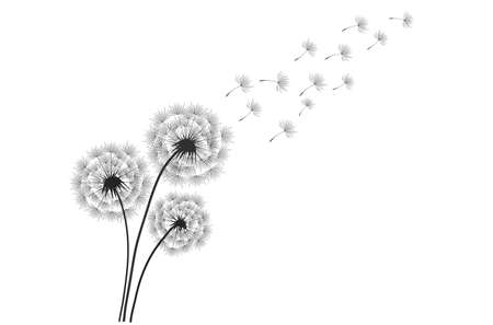 Black silhouette with flying dandelion buds . Vector on a white background