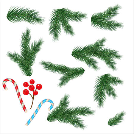 Christmas tree branches. Set of tree, fir, pine. Isolated on a white background. Vector