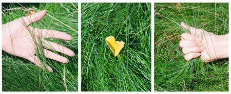 a woman's hand touching the grass photo