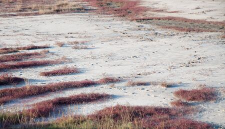 torrid: Torrid grass on salinity ground