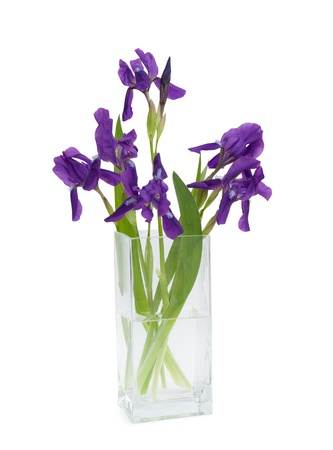 bouquet of flowers iris in a vase, isolated on white Stock Photo - 20276769