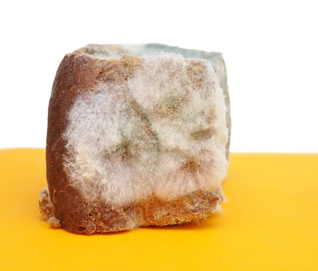yuck: Moldy bread. Old food with toxic mold or mould with plenty colored spores.