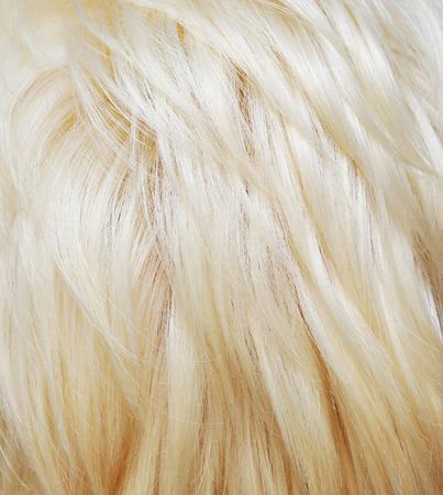 blonde streaks: Blond Hair Texture. Background Stock Photo