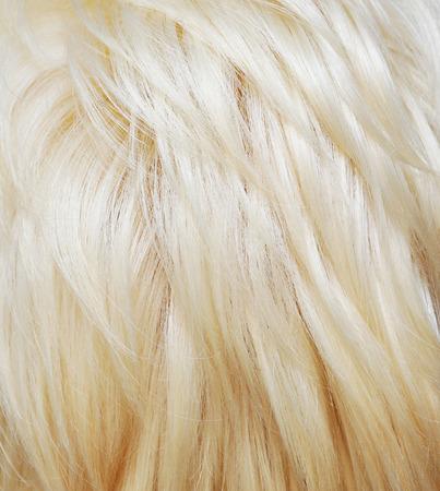 textura pelo: Textura del pelo rubio. Fondo