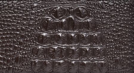 snake leather: Fashion skin. Leather texture background. Close-up photo