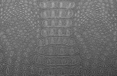 snakeskin: Fashion skin. Leather texture background. Close-up photo