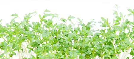 Fresh green cress salad on the white background Stock Photo