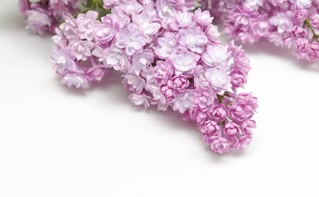 fragility: Macro image of spring lilac violet flowers, abstract soft floral background