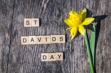 St Davids Day text with yellow daffodil on wooden background