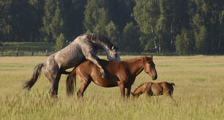 Simple Country Horse Love Imagens