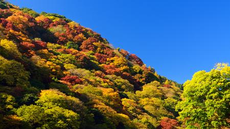 primary colours: Beautiful Fall Foliage in Arashiyama, Kyoto, Japan.