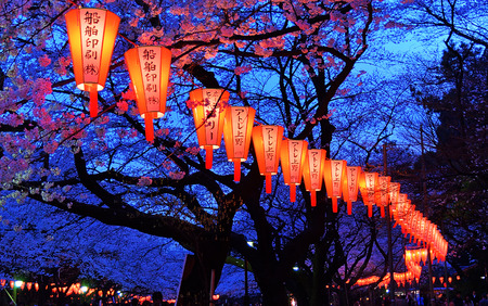 blossom: Beautiful light and colour of Japanese lanterns and cherry blossoms in Cherry-Blossom Viewing  Festival at Ueno park, Tokyo, Japan.