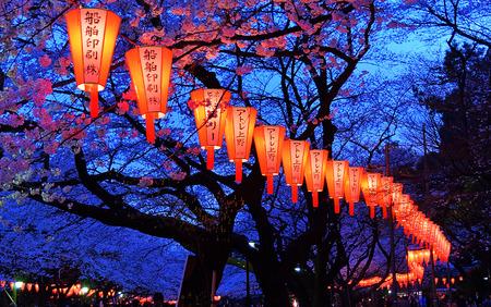 flor cerezo: Hermosa luz y el color de las linternas japonesas y las flores de cerezo en flor de cerezo Visualizaci�n Festival en el parque de Ueno, Tokio, Jap�n.