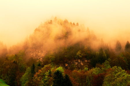 swiss alps: Foggy forest on Swiss Alps.