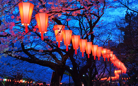 Beautiful light and colours of Japanese lanterns and cherry blossoms in Cherry-Blossom Viewing O-Hanami Festival at Ueno park, Tokyo, Japan.