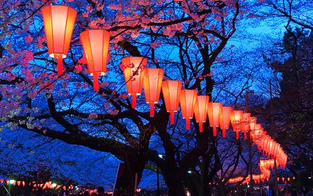 cereza: Hermosa luz y los colores de las linternas japonesas y las flores de cerezo en flor de cerezo Visualizaci�n de O-Hanami Festival en el parque de Ueno, Tokio, Jap�n.