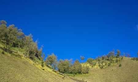 tropical tree: Blue Sky with Tropical Tree on the Mountain. Semeru Mountain, East Java, Indonesia