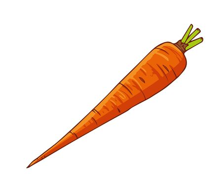 Fresh carrot. Cartoon vector icon isolated on white background.