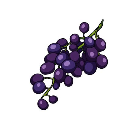 Fresh grape branch. Cartoon vector icon isolated on white background.