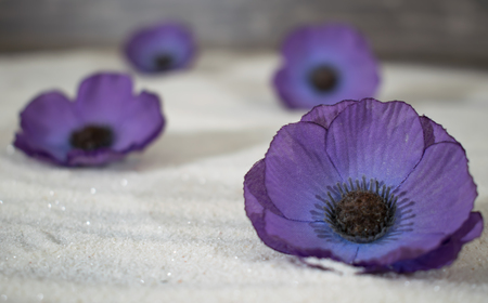 successively: violet blossoms in the sand