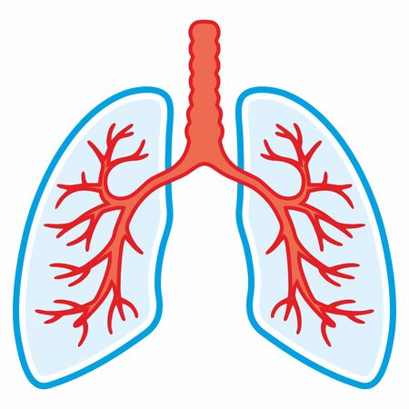 Lung icon. Simple design. Line vector. Isolate on white background. Pulmonology Icon