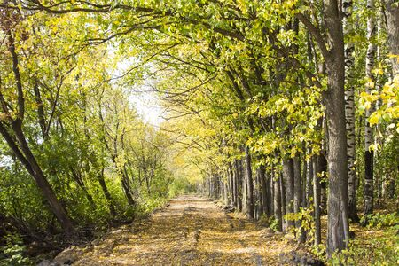 The road in the autumn forest. Colorful autumn colors in the forest with a road in the fall season. 写真素材