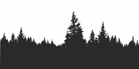 Forest silhouette background. View to realistic coniferous trees. Illustration of detailed Coniferous Forest silhouette.
